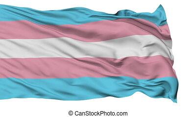 haut, drapeau ondulant, fin, transgender, fierté