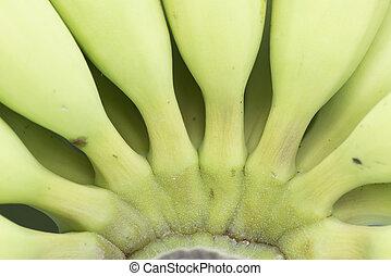 haut., fin, vert, jeune, banane