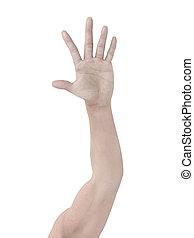 haut, main