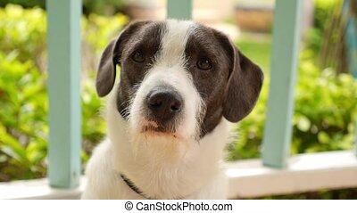 haut., mignon, doux, chien, renifler, quelque chose, fin, ...