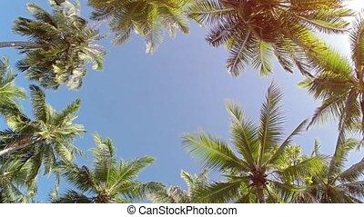haut, perspective, paume, fond, île, arbres, ...
