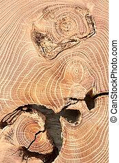 haut., section, arbre, croix, coffre, fin