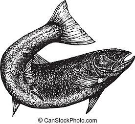 hautement, détaillé, saumon, croquis