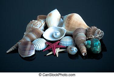 hav, shells., snäckskal, kollektion