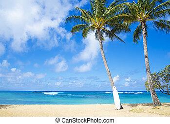 havaí, curfboard, árvore palma, coco