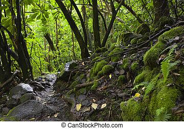havaiano, floresta tropical, maui, havaí