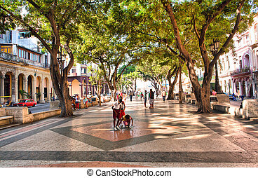 HAVANA, CUBA-MAY 14: The boulevard of El Prado in Old Havana...