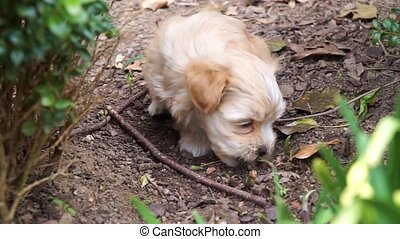 Havanese puppy bitting grass and on a bush when suddenly...
