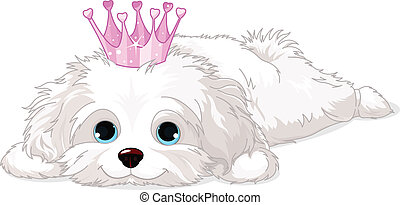 Havanese Puppy with crown - A cute white Havanese puppy with...