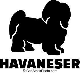 Havanese with german breed name