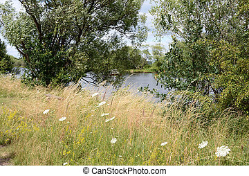 Havel river at summer time (Brandenburg, Germany). meadow.