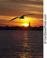 havn, solnedgang