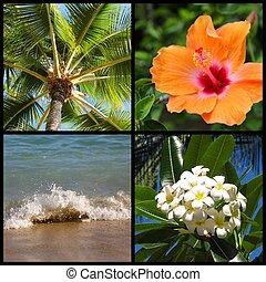 hawai, montaje