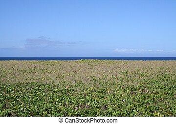 Hawaii Beach Plants