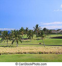 Hawaii Golf in Coastal Palm Grove