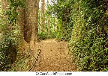 Hawaii jungle path