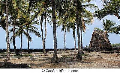 Hawaii Palm Trees and Hut
