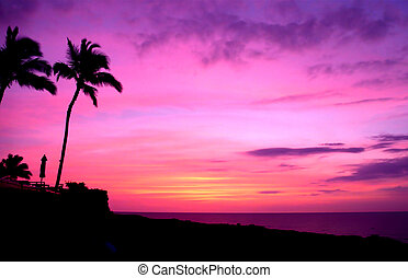 Hawaii Sunset and Palm Trees - A purple and orange sky on ...