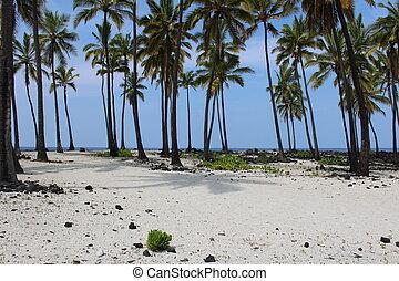Hawaii White Sand Beach