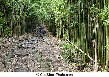 Hawaiian Bamboo Forest, Maui