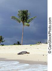 hawaiian beach with turtle