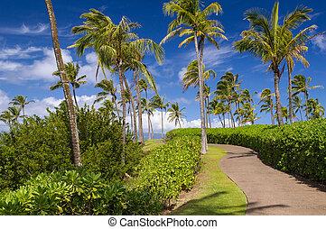 Hawaiian Coastal Trail