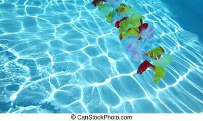 Hawaiian flowers floating in pool water