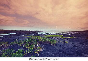 hawaiian, kyst