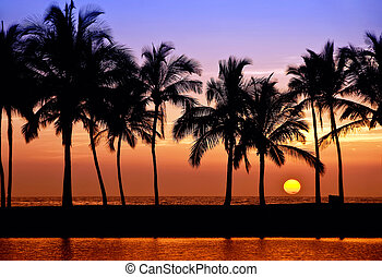 hawaiian, palm trä, solnedgång