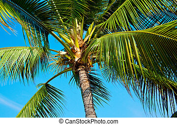 palm trees - Hawaiian palm trees shot from below on a sunny...