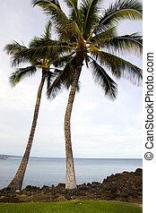 Hawaiian Palms and Beach