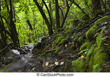 Hawaiian Rainforest, Maui, Hawaii