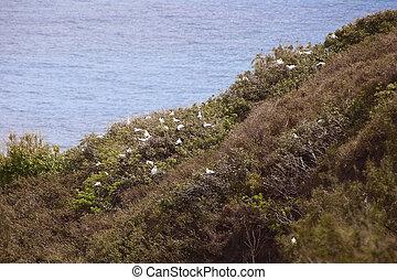 National Wildlife Refuge Kilauea Kauai Island Hawaii
