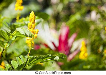 Hawaiian Tropical Flowers, Maui