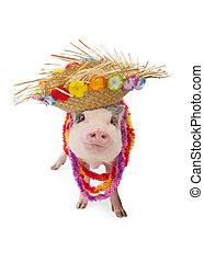 hawaiianer, tragen, blumenkette, hut, schwein