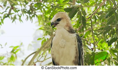 Hawk bird of prey snake eagle on tree branch and green foliage landscape. Close up predatory bird in wild nature. Ornithology, birdwatching, zoology concept.
