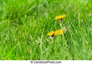Hawk bites in the grass
