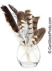 Hawk feather in glass jar isolated on white