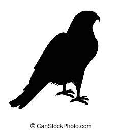 Hawk Flat Design Vector Illustration - Hawk vector....