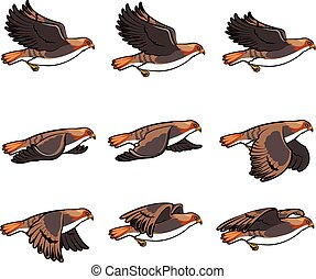 Hawk Flying Animation Sprite - Vector Illustration of a Set...