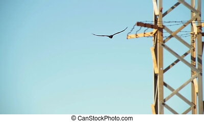 A long shot of a hawk flying freely on a blue sky. The shot is taken under a sunny day.