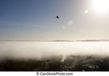 Hawk Flying Over the Clouds