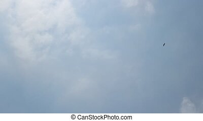 Hawk in the Skies - Flying hawk in the cloudy sky.