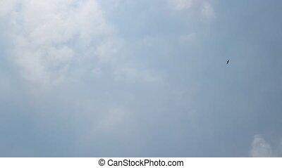 Hawk in the Skies - Flying hawk in the cloudy sky.
