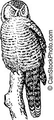 Hawk owl (Surnia ulula) sitting on the stub of the tree