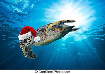 hawksbill sea turtle with santa hat