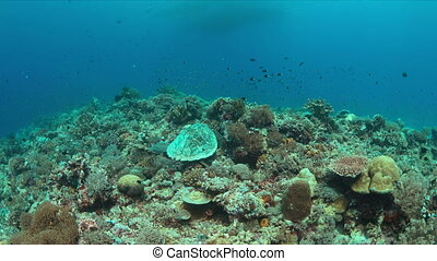Hawksbill turtle on a colorful coral reef.
