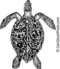 Hawksbill turtle, vintage engraving. - Hawksbill turtle, ...