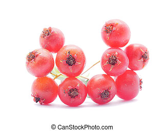 hawthorn berries on white background