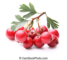 Hawthorn berry with leaves